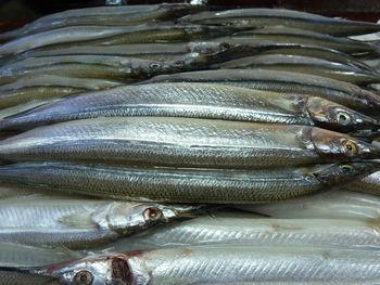 新鲜海鲜鱼类批发 绿色无污染深海金枪鱼酒店餐饮专供
